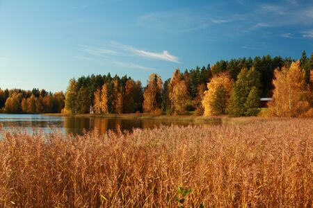 Beautiful autumn colors on the share of a lake in Finland photo