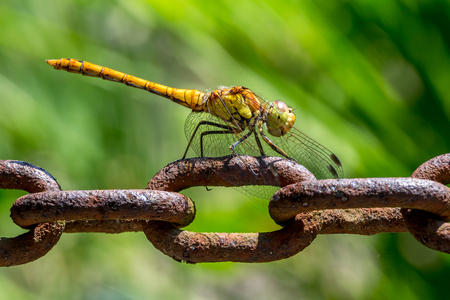 Dragonfly on chain