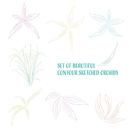 sutra: Set of beautiful colored contour sketched orchid flowers