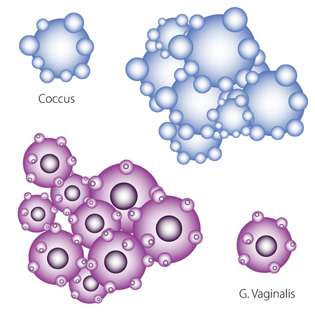 Bacteria infecting human, vector illustration  of Coccus and Gardnerella vaginalis