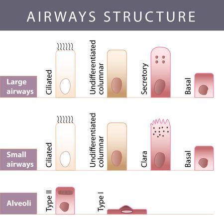 cribriform: Nasal mucosa cells and micro cilia vector scheme Illustration