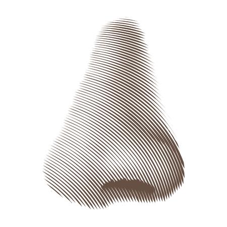 Vector Illustration of Etched or Engraved Nose