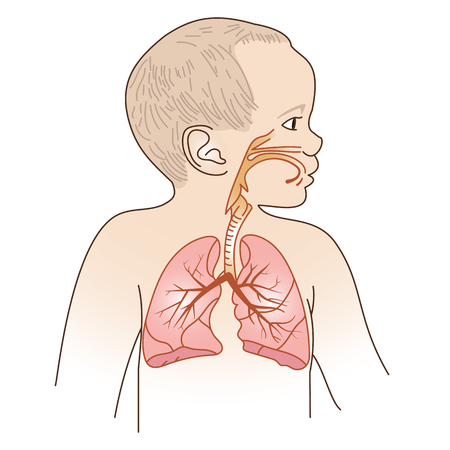 Vector Illustration of a Child Respiratory System Organs  イラスト・ベクター素材