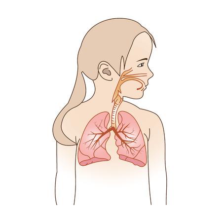 sistemas: Ilustración vectorial de un niño del Sistema Respiratorio Órganos