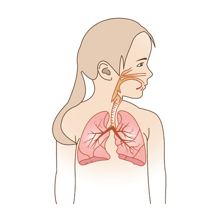 Vector Illustration of a Child Respiratory System Organs Banco de Imagens