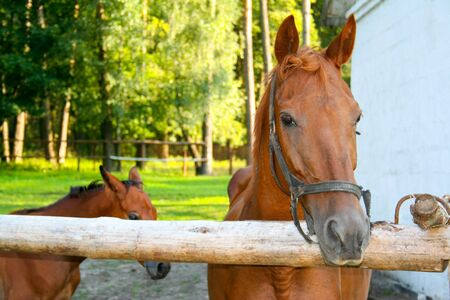 progeny: Horse with her foal behind the fence on a horse farm