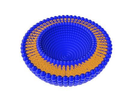白い背景に分離されたリポソーム bi 層構造の医療 3 D イラスト 写真素材