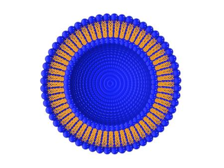 리포좀의 이중 층 구조의 의료 3D 그림 흰색 배경에 고립 스톡 콘텐츠
