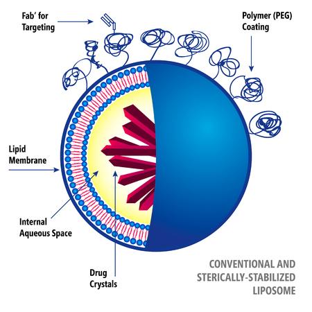 Illustration médicale du système liposomes de délivrance de médicaments