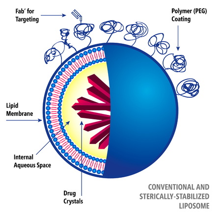 Medical illustration of liposomes drug delivery system