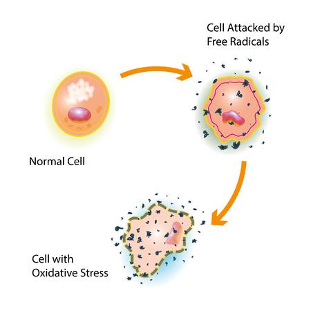 Oxidatieve stress van een gezonde cel veroorzaakt door een aanval van vrije radicalen Stock Illustratie