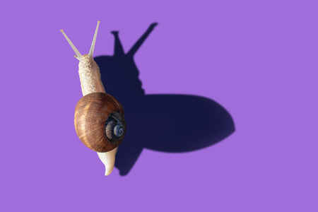 Grawling garden snail isolated on violet color background, close-up macro top view
