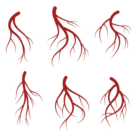 Human veins, red blood vessels set. Realistic vector medical illustration isolated on white background Illustration