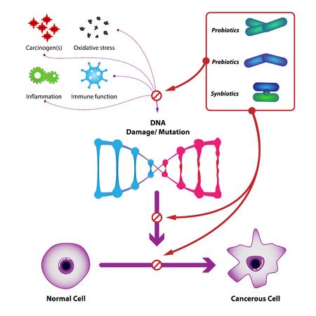 Las bacterias probióticas previenen el daño y la mutación del ADN, previenen la formación de células cancerosas. Ilustración vectorial médica