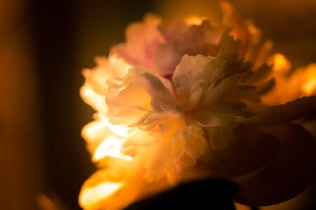 Petals of the opened flower of a peony, macro in warm color scale and soft light