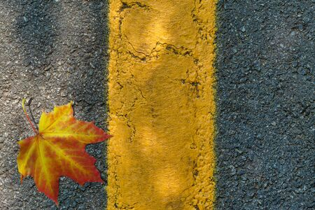 Asphalt texture with a yellow dividing strip, a yellow maple leaf and a shadow from foliage on a sunny day. Top view
