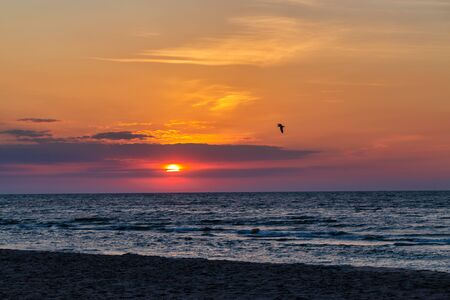 Red sunrise in the early summer morning on the background of the sea and sand. Seagull flies over clouds Фото со стока