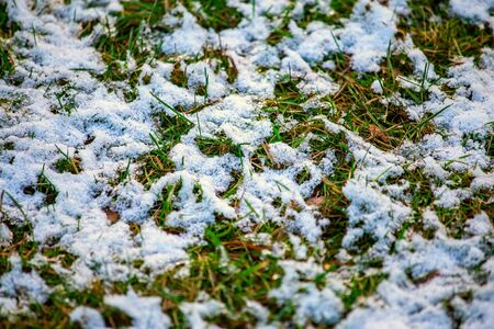 Thin layer of first snow on green grass. Winter is coming background