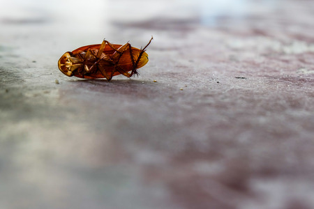 headless cockroach on the ground
