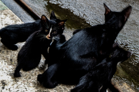 little black cat Look at the camera with Cat family Homeless