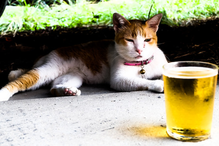 Glass of cold beer sitting front a cat in summer relax concept