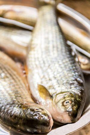 fresh water fish: Fresh Water FIsh