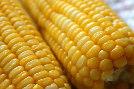 easily: Corn plants are easily grown and is delicious. Stock Photo