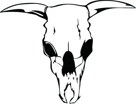 animal skull: skill bull Illustration