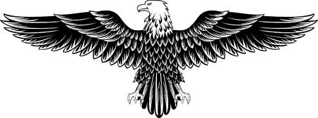 eagle wings: Vector image of an eagle with the straightened wings