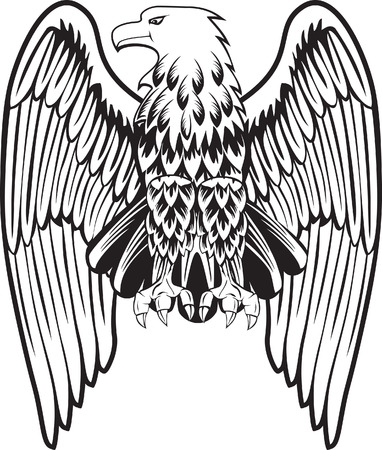 hawks: Aquila con le ali abbassate  Vettoriali