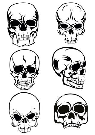 filibuster: L'immagine vettore di cranio di vario genere