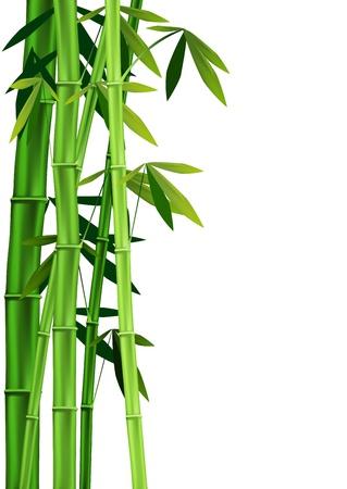 Las imágenes vectoriales de los tallos de bambú en el fondo blanco
