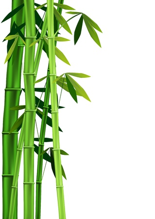 Vector images of stalks of bamboo on white background