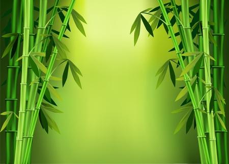 Las imágenes vectoriales de los tallos de bambú Ilustración de vector