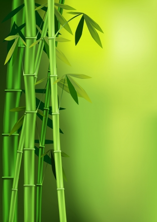 Vector images of stalks of bamboo Illustration