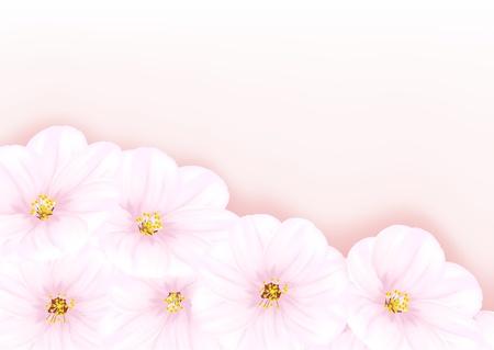 far east: Vector image of blossom Oriental cherry tree
