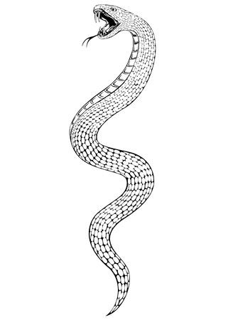 serpiente de cascabel: ilustración de la serpiente Vectores