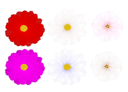 The image of various flowers