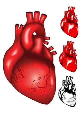 body parts: Vector illustration of human heart mesh, colour and black   white