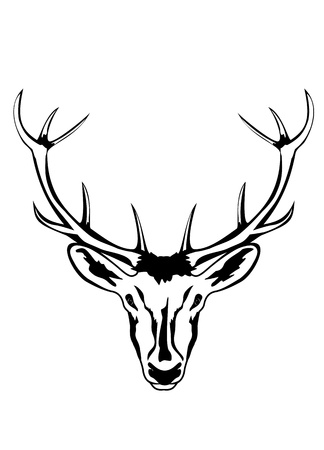 an illustration of head of an artiodactyl animal with horns Vector