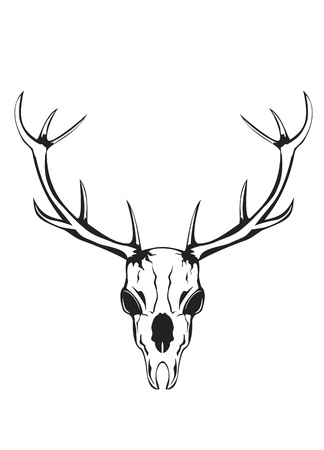 deer hunting: an illustration of skull of an artiodactyl animal with horns Illustration