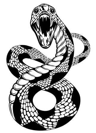 serpiente de cascabel: ilustraci�n de la serpiente con la boca abierta en el fondo blanco Vectores