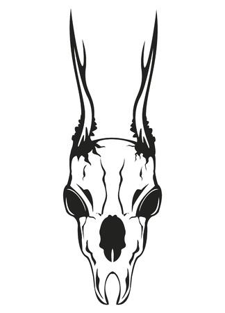 Vector beeld schedel kuit op een witte achtergrond