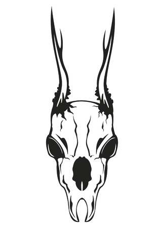 of antelope: Vector image skull roe on white background Illustration
