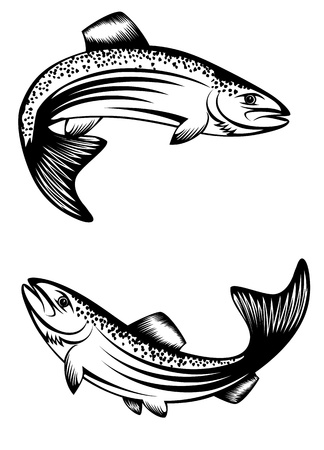 Vector image of floating fish trout Çizim
