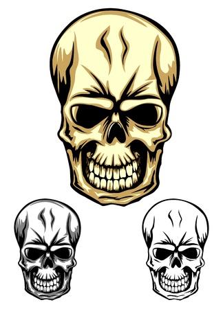 Vector illustration human skull set Stock Vector - 15975044
