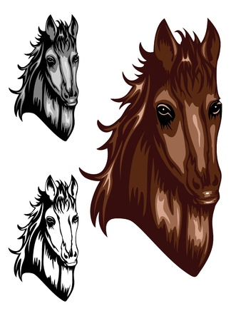 illustration head horse set Vector