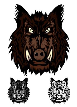 Wildschwein: Bild Kopf aggressive Wildschwein Illustration