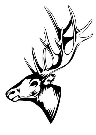 stag horn: Vector an illustration of head of an artiodactyl animal with horns