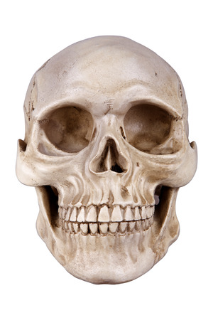 Human skull (cranium) isolated on white background photo